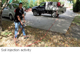 Tree-Injection-vs-Soil-Injection_4